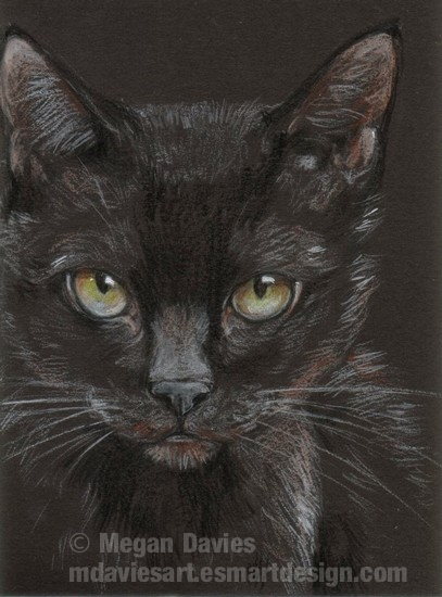Black Cat ACEO by Pannya