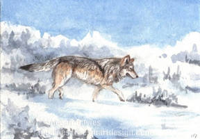 Wolf in the Snow ACEO by Pannya