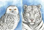 Snowy Owl + White Tiger ACEOs