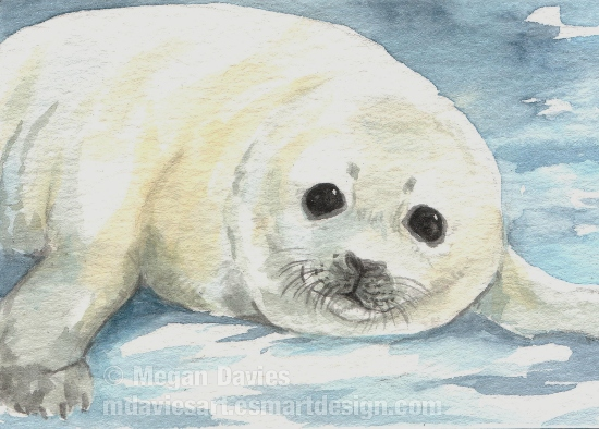 harp seal pup aceo by pannya on deviantart