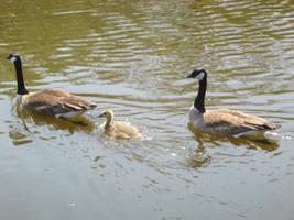 Family swim by 4chocolatemew