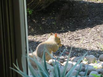 Babi squirrel by 4chocolatemew