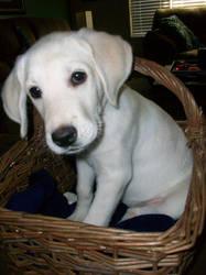 Echo in a basket