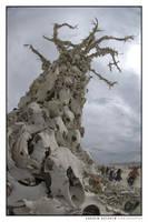 The Bone Tree, Burning Man (2007) by Khoshq