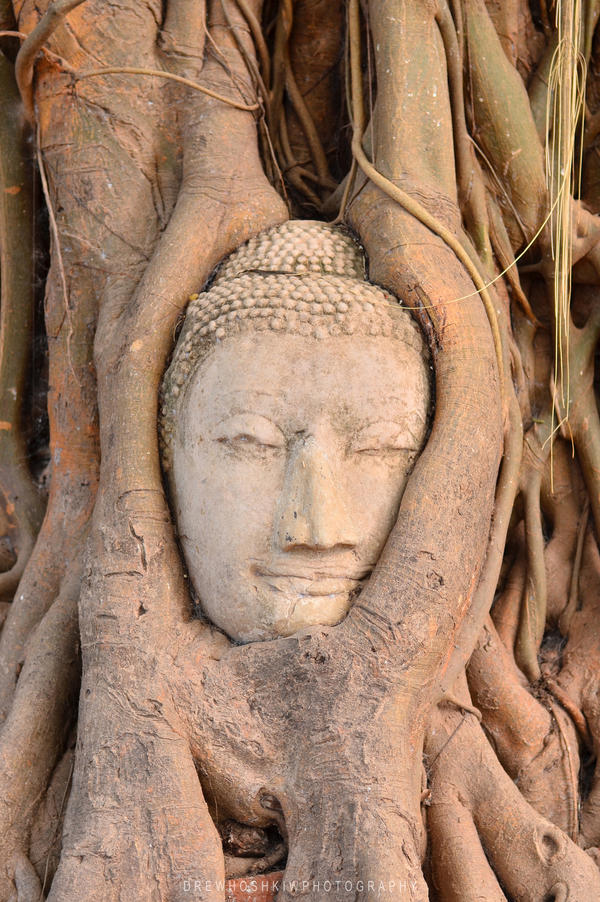 Buddha Tree by hoshq