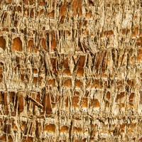 Seamless Palm bark by ShangyneX