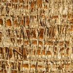 Seamless Palm bark