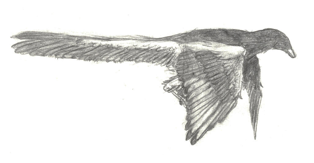 Archaeopteryx Comes in to Land by 8bitAviation on DeviantArt