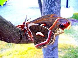 Moth by hopikey23