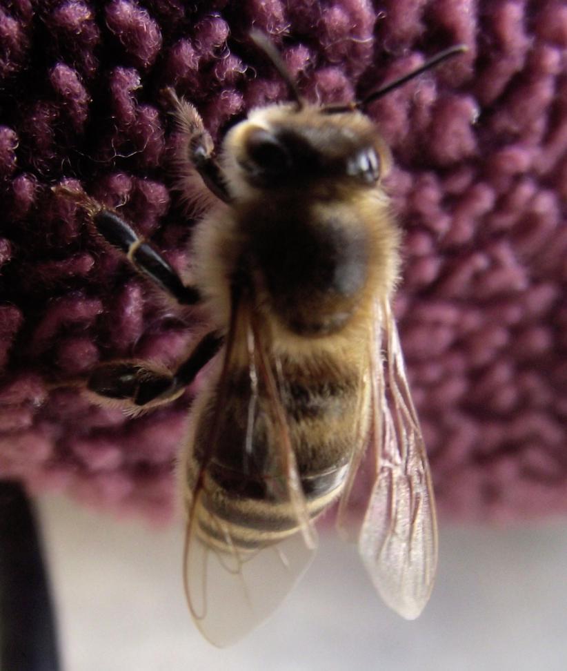 bee I. by freewai