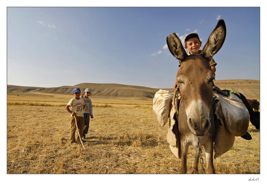 donkey by velsheda