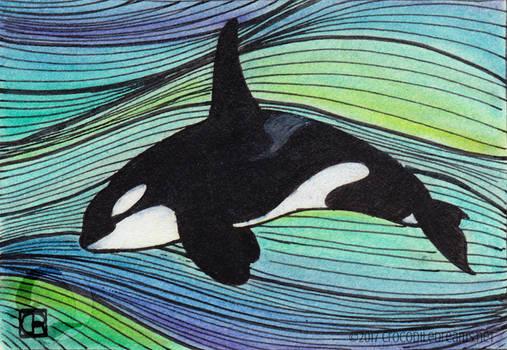 Little Orca