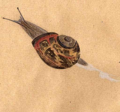 snail by emm4239