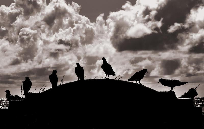The Sunday Doves by sumajarong