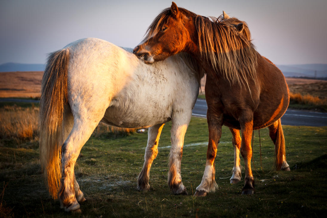 Horses by Spudgun