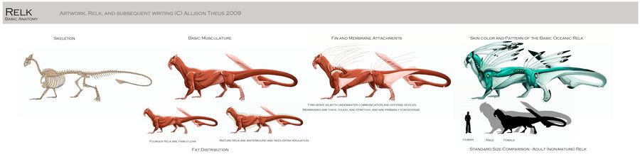 Relk - Basic Anatomy