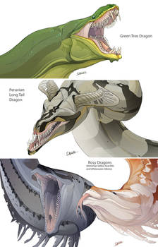 Snake Dragons