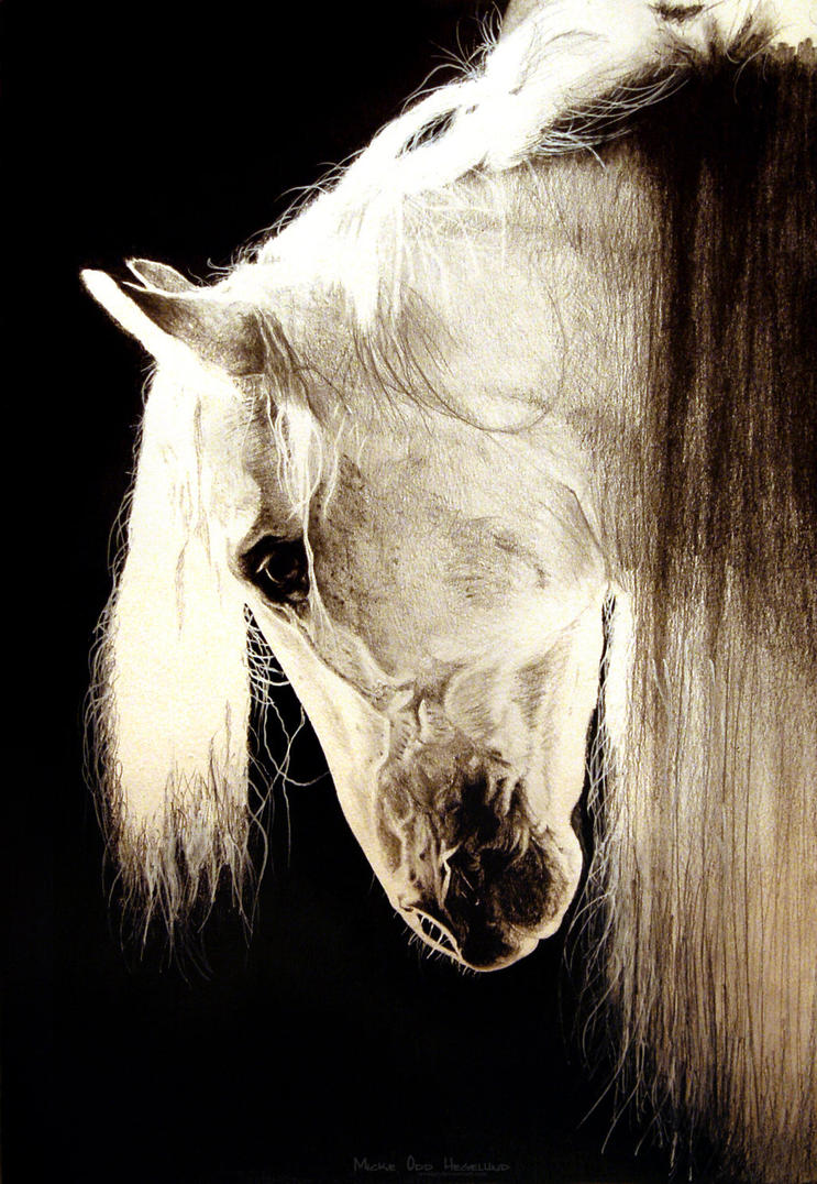 Horse Pencil Portrait by wriiist