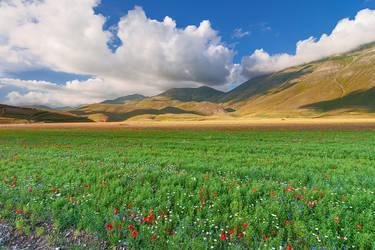 Flowering in Castelluccio di Norcia by jimitux