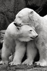 Polar Bear Love by allsoulsnight