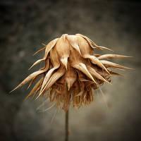 Dead flower by allsoulsnight