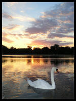 Swan by allsoulsnight