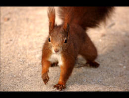 Squirrel Action by allsoulsnight