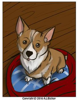 Test 1: Da corgi puppy!