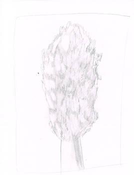 Poplar Tree Practice