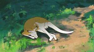 Kangaroo Lounging