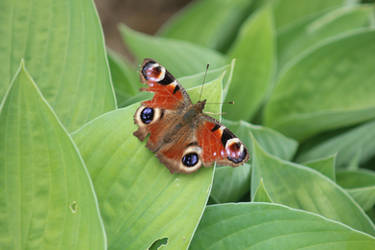 Little Butterfly by xTH3Mx