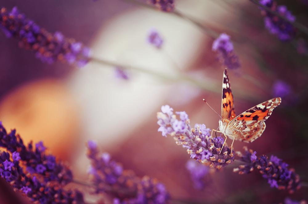 Purple by darkpsychea