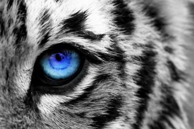 Eye of the tiger by PolarPhoenix