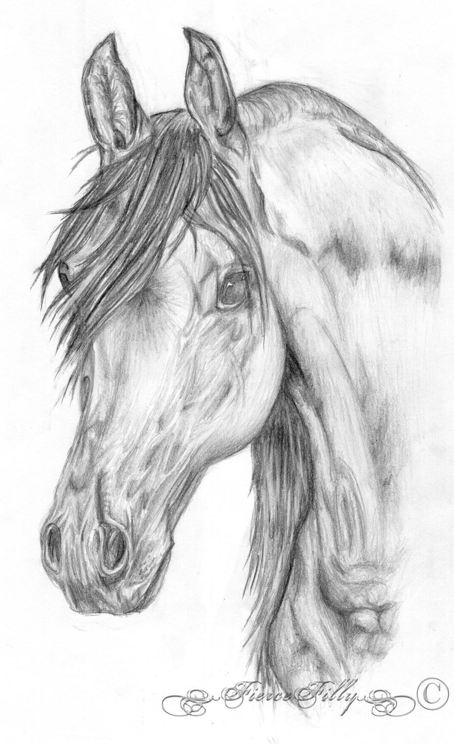 Arabian Horse Head by FierceFilly on DeviantArt