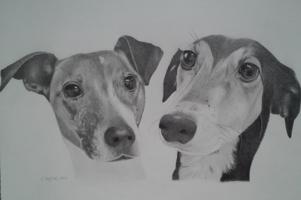 dogs commission by gypsytoast