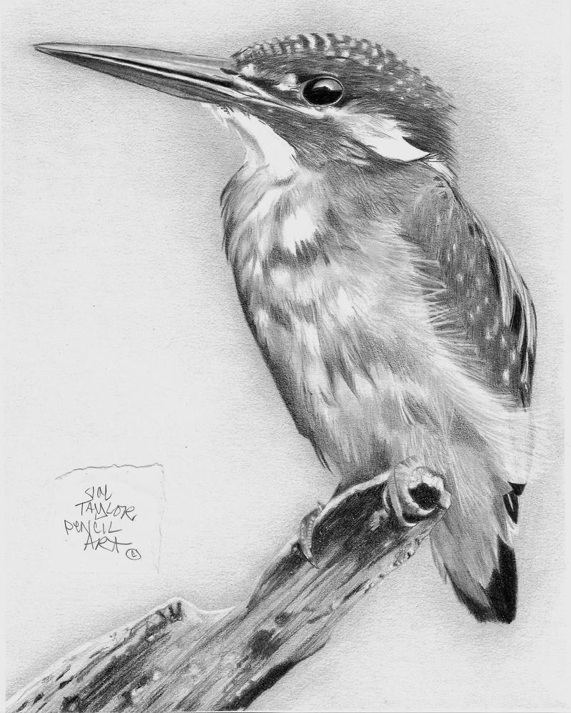 Kingfisher by gypsytoast