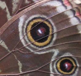 Watchful Wings