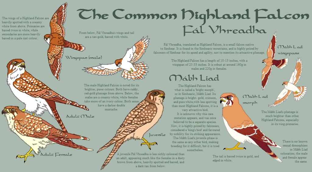 The Highland Falcon species sheet by FALCONorthern
