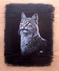 Bob the Cat by MatthewJacuzzidotcom