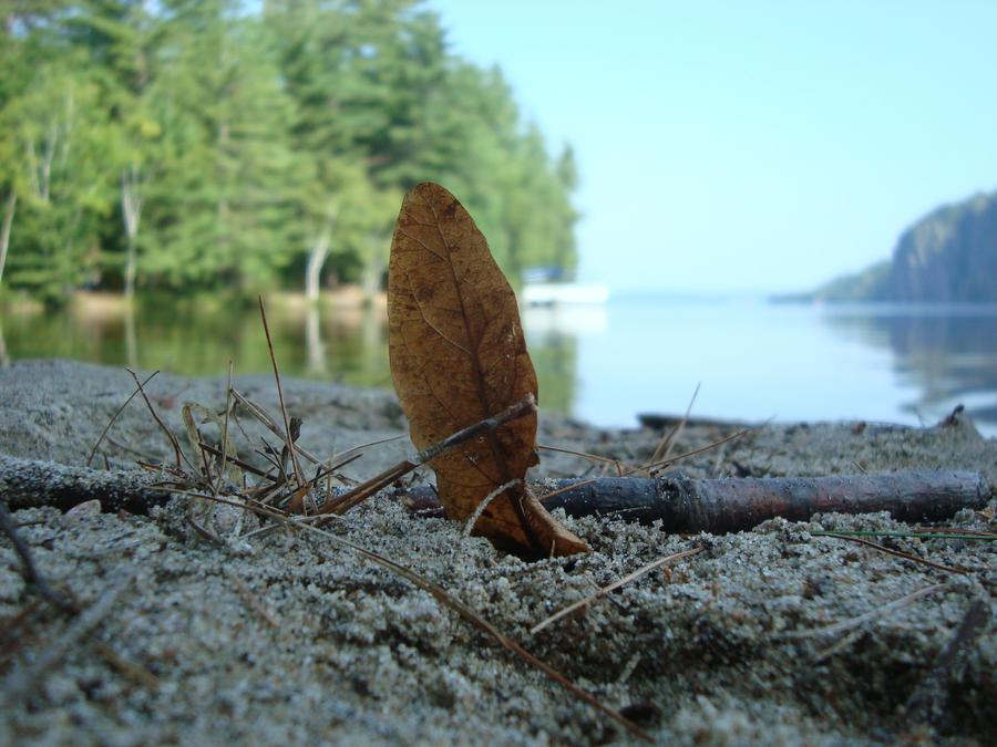 Leaf on Bon Echo Beach by GoalieGirl30
