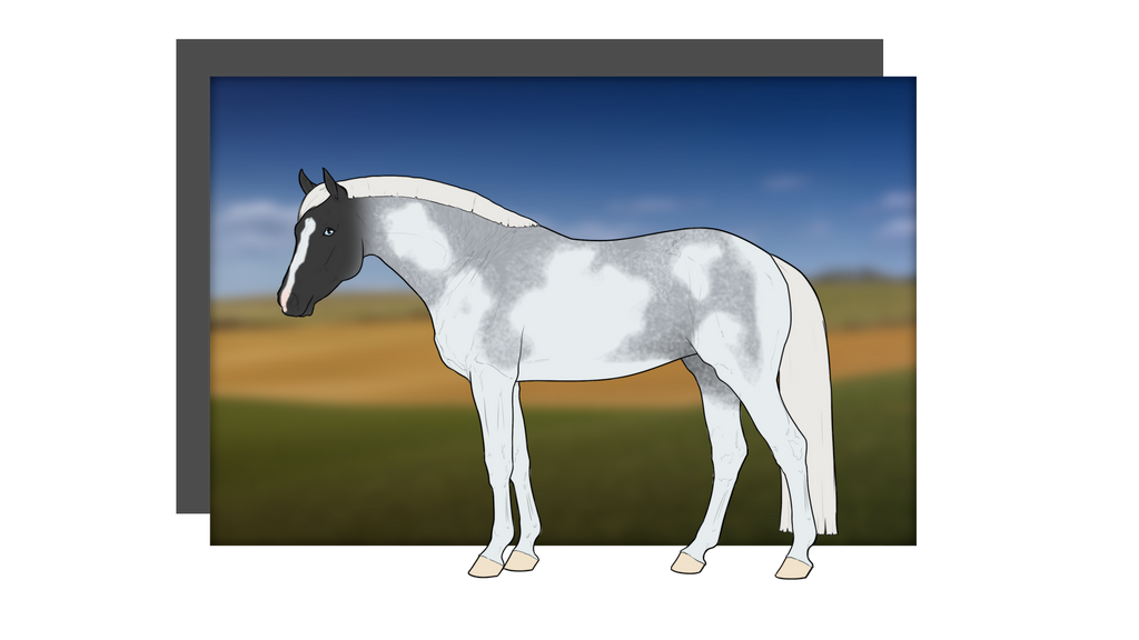 Free Silver Blue Roan Paint Horse Adopt - Closed by ...