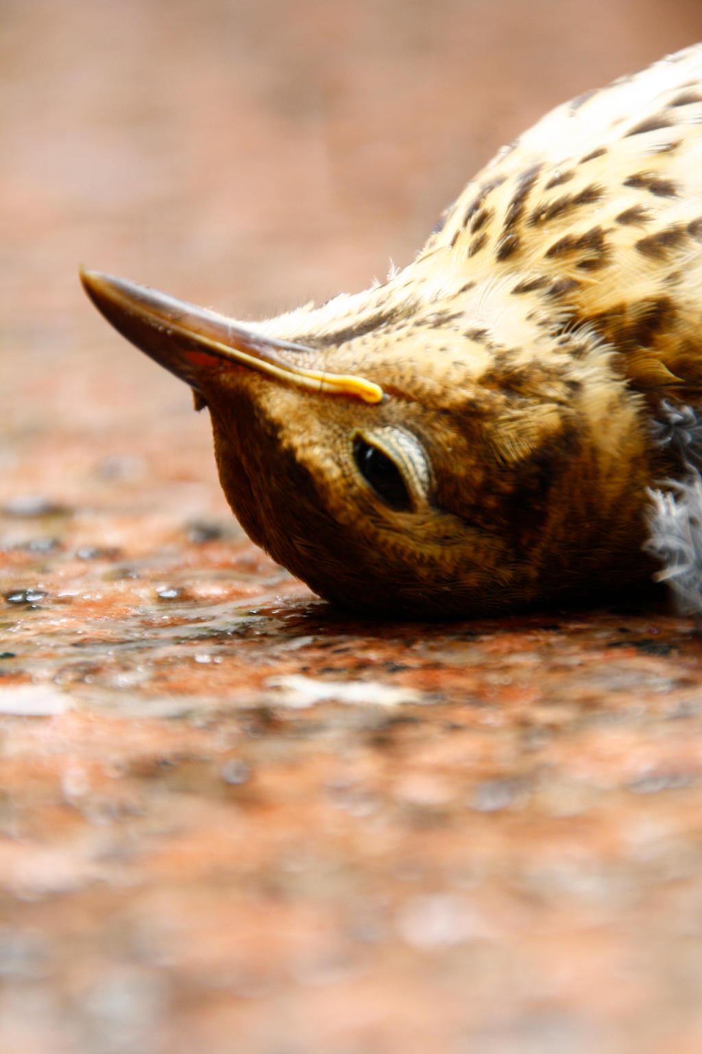 Dead Birds Head. by BrunoTorres on DeviantArt   1024 x 1536 jpeg 174kB