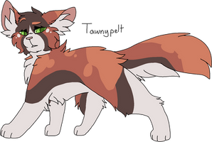 24 Tawnypelt (Remake) by Icedog-McMuffin