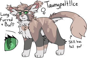 Tawnypelt ! Ice Ref Sheet by Icedog-McMuffin