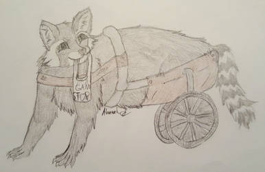 Josh the Melanistic Raccoon by Hawkpelt94