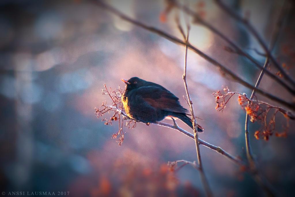 Bird by v4nssi