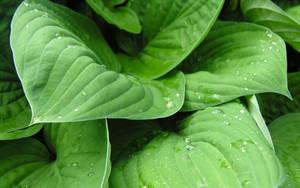 Leaf it to me 3 by ToeTag