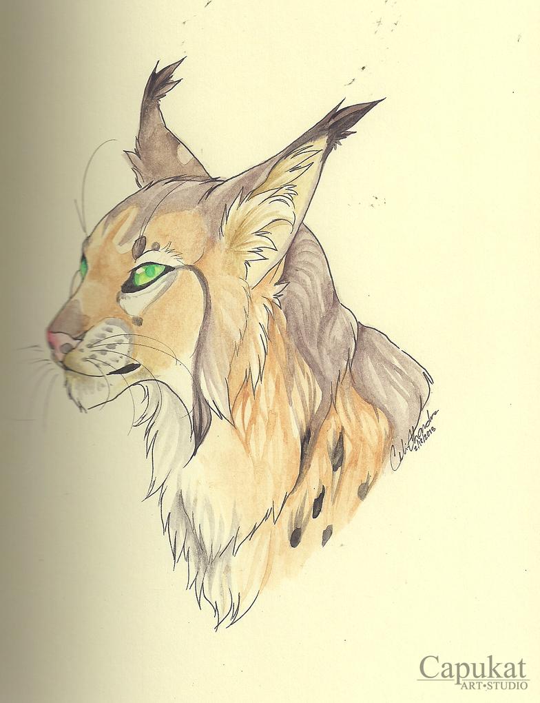 watercolor example by Capukat