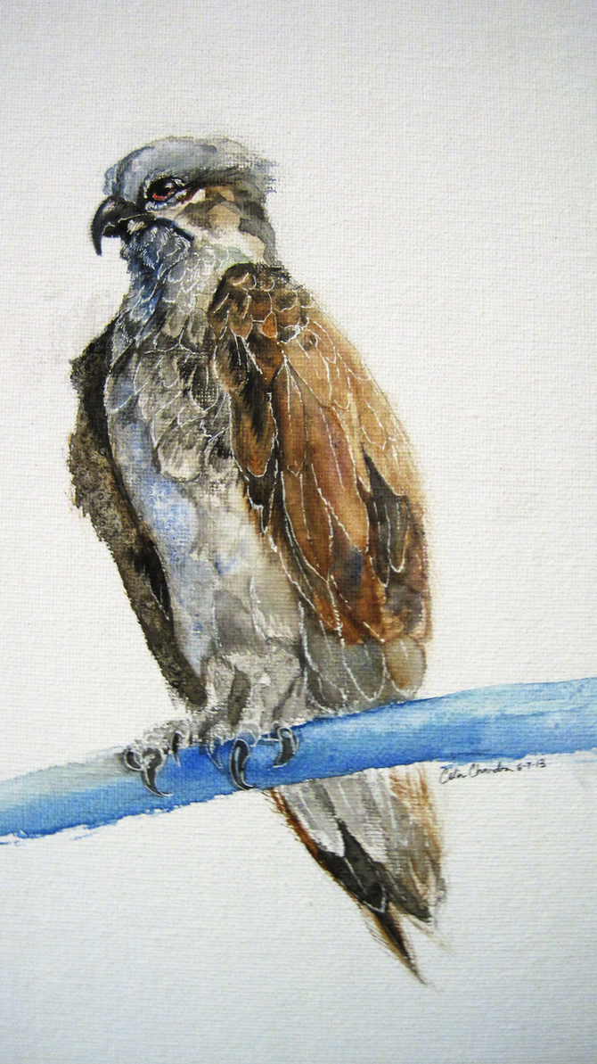 Osprey rough painting by Capukat