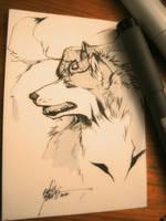 Sketch ACEO by Capukat